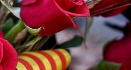 Els catalans regalarem unes 7 milions de roses