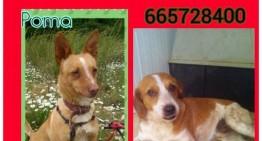 Trobats els dos gossos robats a PLF