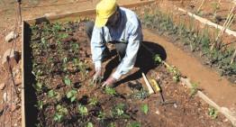Obren un nou termini per sol·licitar horts ecològics municipals