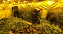 Detingut un home de 67 anys per cultivar 950 plantes de Marihuana en un garatge de Blanes