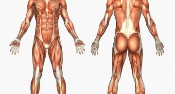 dimecres matí: Massatge Terapèutic per a que et sentis molt bé!
