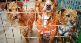 Els casos d'animals abandonats o perduts augmenten entre un 30% i un 50% en l'últim any a Palafolls