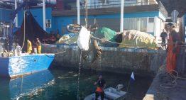 Les tasques de neteja al port de Blanes recullen 5 tones de deixalles