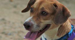 Gairebé 300 animals trepitgen la Protectora de Palafolls durant 2016