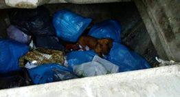 Troben un gos abandonat en un contenidor a Malgrat