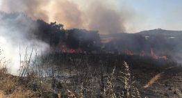 Investiguen l'incendi que ha cremat 4.500 m2 a PLF