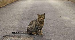 Blanes expedieix carnets que permeten alimentar els gats de carrer