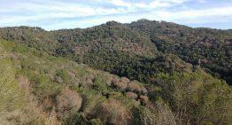 Els boscos de Palafolls es convertiran en matolls d'aquí a 30 anys