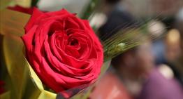 Palafolls celebrarà dijous un Sant Jordi reinventat