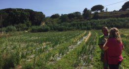 Palafolls substitueix la protecció de plàstic convencional als cultius per un nou sistema
