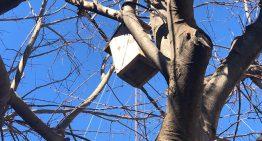 L'Ajuntament organitza un taller per a aprendre a fer caixes niu