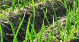 L'Horta Pla de Munt participa aquest cap de setmana en el Benvinguts a Pagès