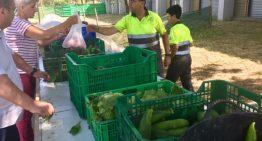 La Fundació del Molí d'en Puigvert organitza un mercat de verdura ecològica per donar sortida a l'excedent