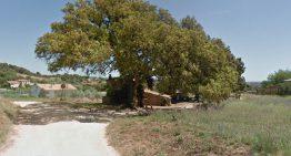 Palafolls té dos arbres catalogats d'interès comarcal o local