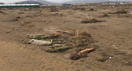 La xifra dels danys del temporal Gloria a Palafolls no estarà per sota dels 5 milions d'euros