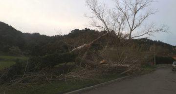 van caure arbres a Ciutat Jardí