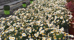 El sector de la flor ornamental i de turisme rural se suma a les accions solidaritat