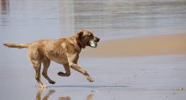 Malgrat habilitarà una platja per a gossos