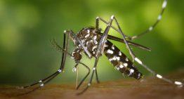 Blanes fa una crida a lluitar contra la proliferació del mosquit tigre