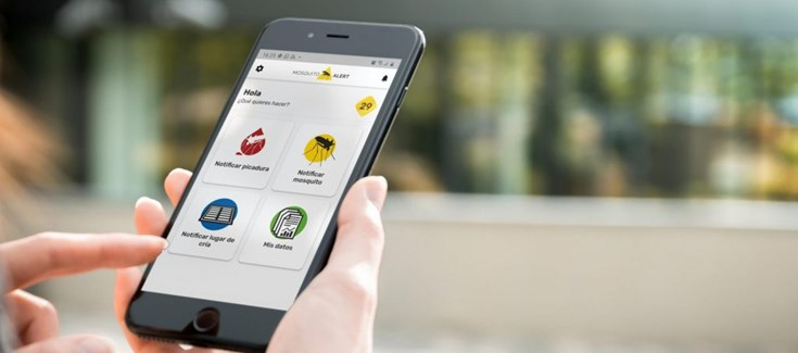 Palafolls promou l'ús d'una app per combatre el mosquit tigre