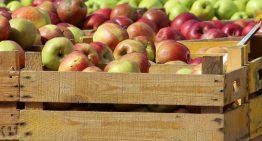 Una plataforma palafollenca aglutina productors d'aliments locals per ajudar en la seva distribució