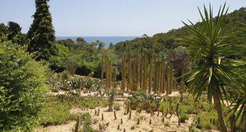 Blanes encarregarà un informe jurídic sobre el futur del paratge Pinya de Rosa